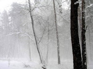 зима непогожая