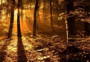 Песня - У нас под лесом, лесом
