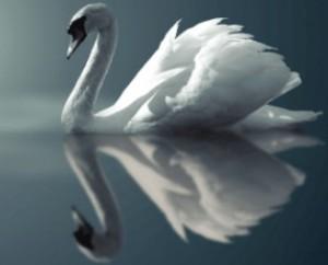 Белый лебедь воду пил