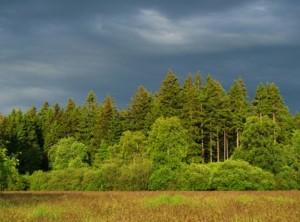 лирическая песня - Из-за лесику, ой, да лесу тёмного